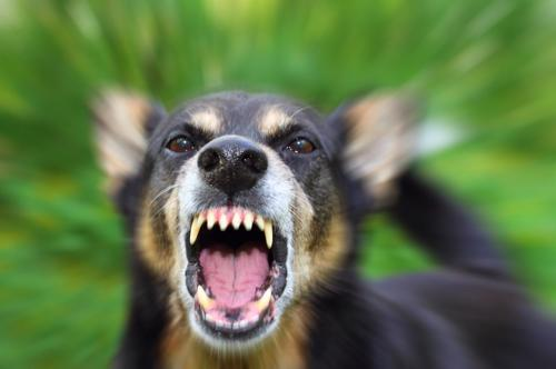 Our Macon dog bite attorneys are here to help you recover compensation for your damages.