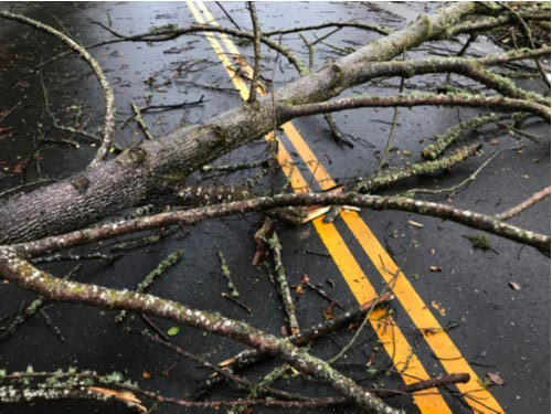 Tree branch blocking road after storm