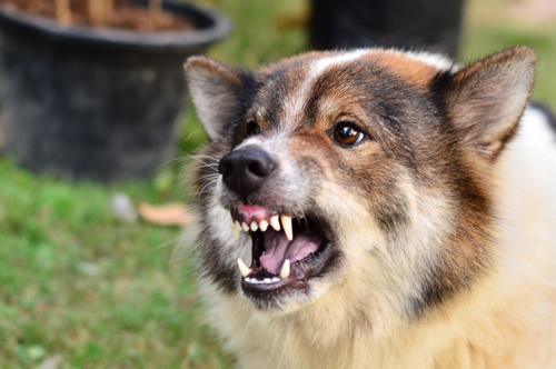 Contact our Atlanta dog bite lawyers today.